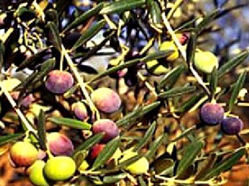 Termite di bitetto - Puglia in tavola bitetto ...